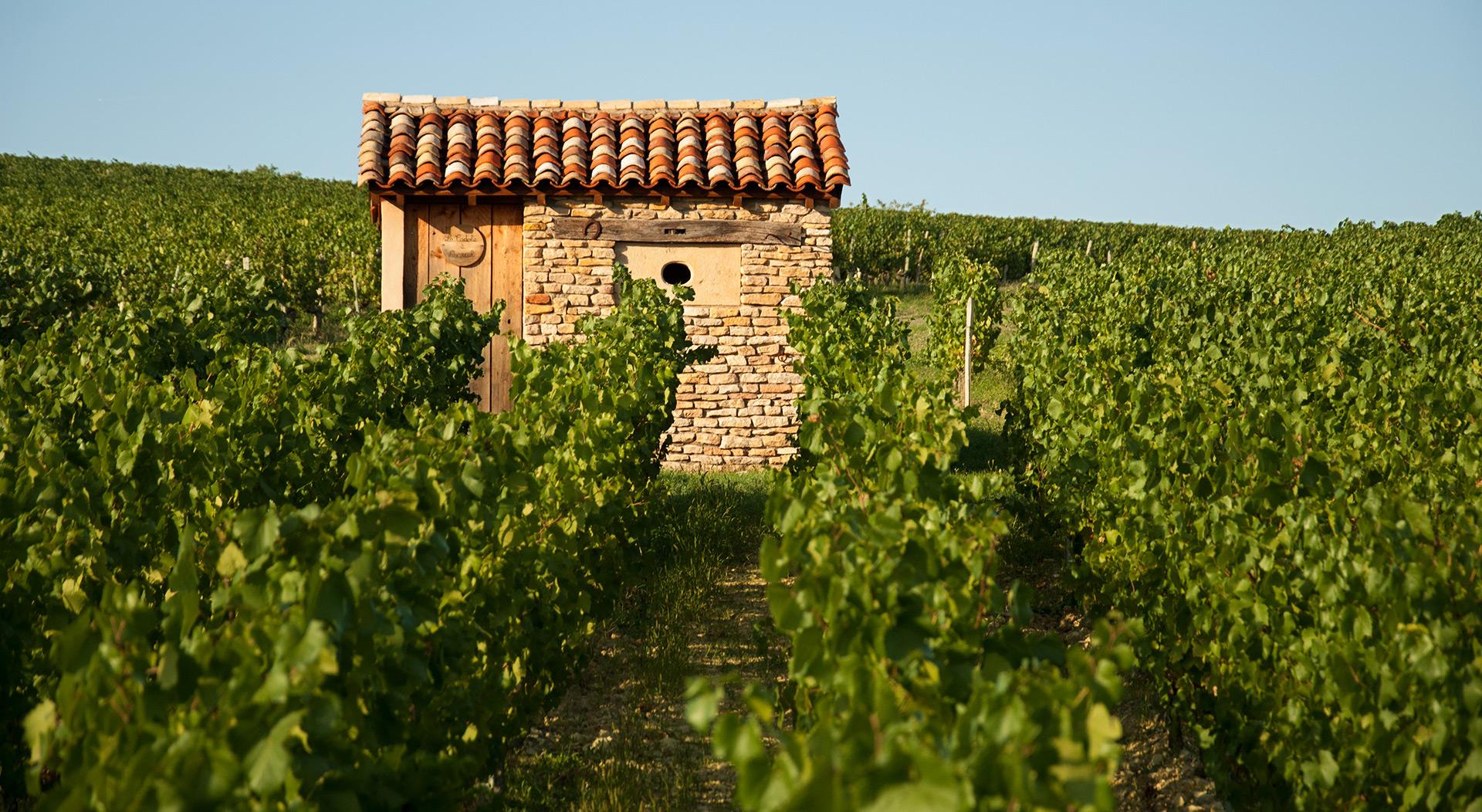 cadoles-chardonnay-vignes-s2